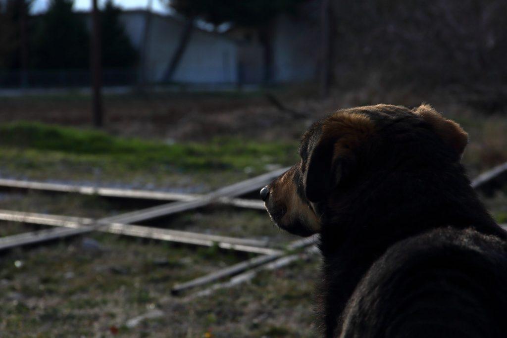 ストリモナス駅の犬